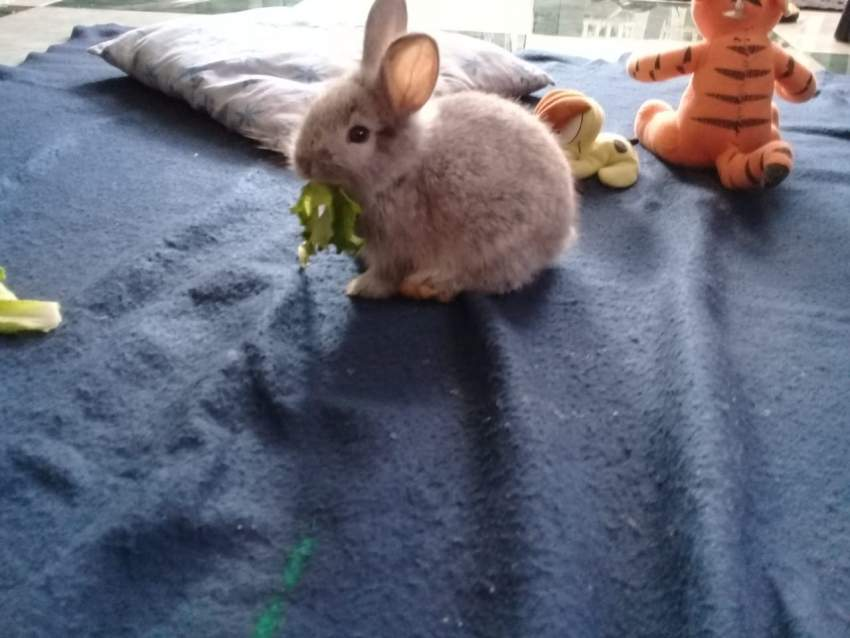 Looking for a pet friendly, loving family for a rabbit