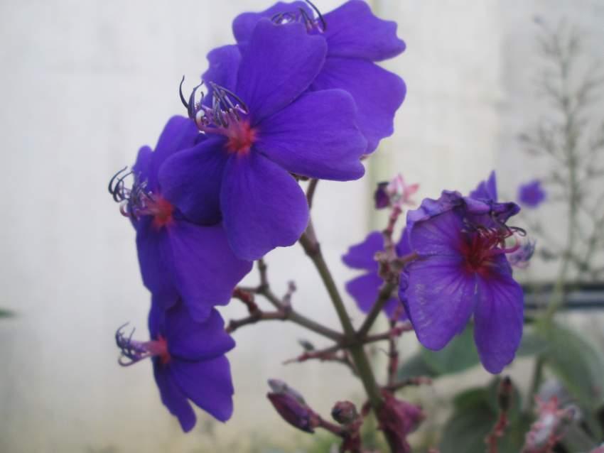 Mini arbre Fleur Mauve