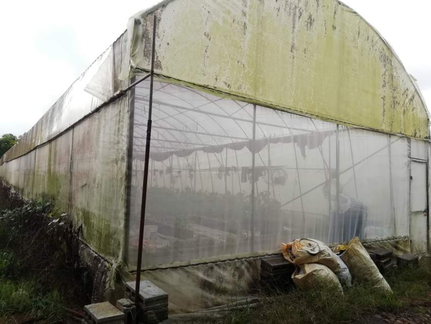 greenhouses for sale / serres à vendre  - Land at AsterVender