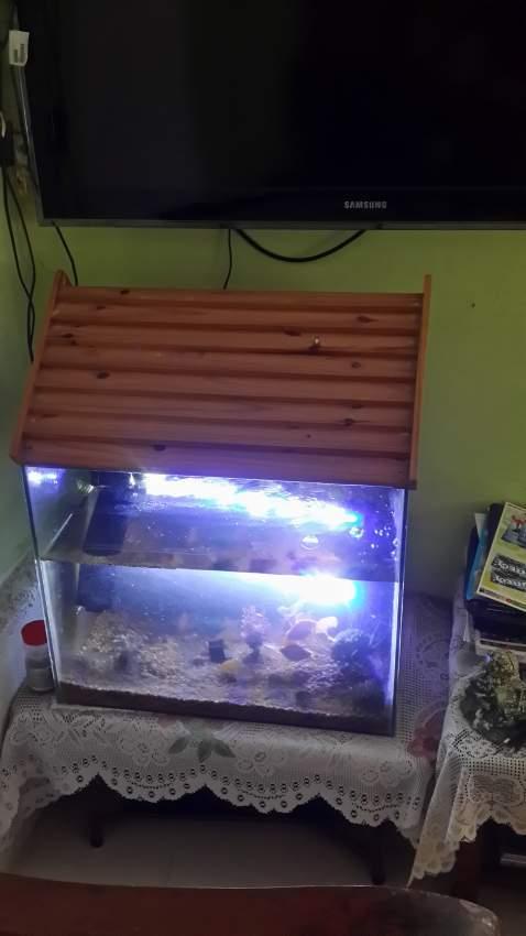Aquarium 58×47 cm