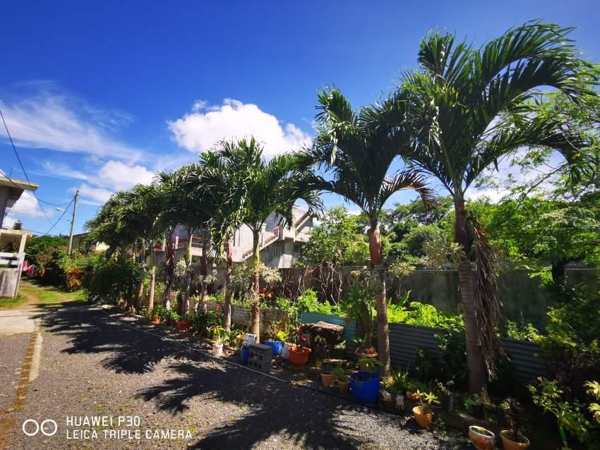 Palmiste Paque